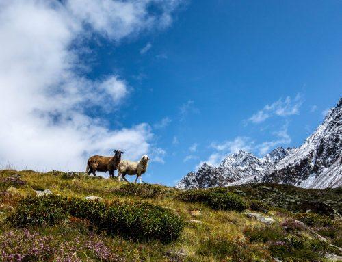 Sommer im Langtauferer Tal